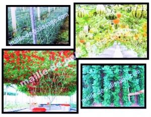 Tuteur horizontal. Assez utilisé en horticulture et floriculture pour améliorer la qualité des cultures